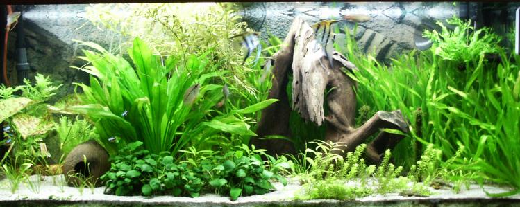 Home_aqua_240_litres
